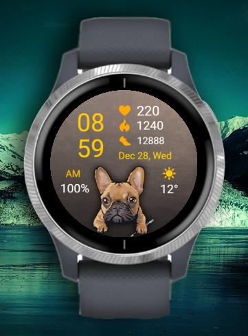 Dog - French Bulldog