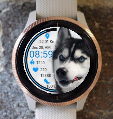 Garmin Watch Face - Husky Dog