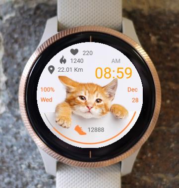 Garmin Watch Face - Cute Kitten