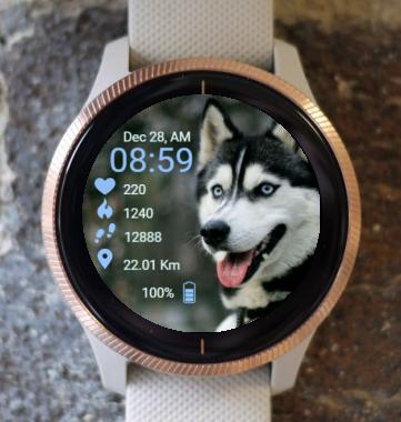 Garmin Watch Face - 2 Husky Dog