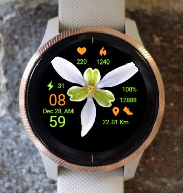Garmin Watch Face - Star Flower BR