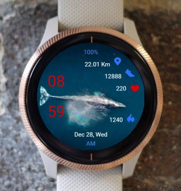 Garmin Watch Face - Whale