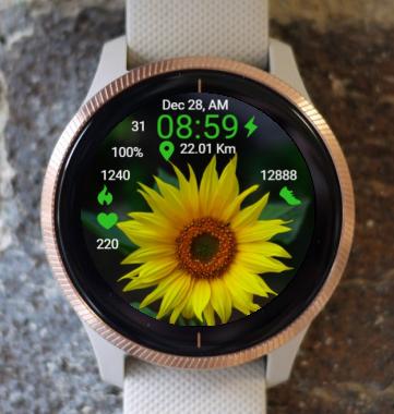 Garmin Watch Face - BRR Sunflower