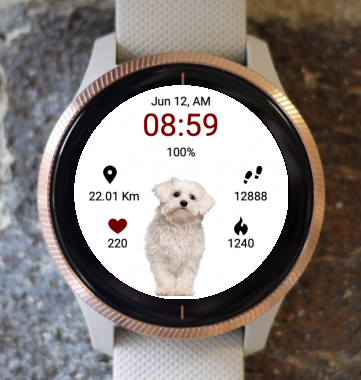 Garmin Watch Face - Puppy Curious